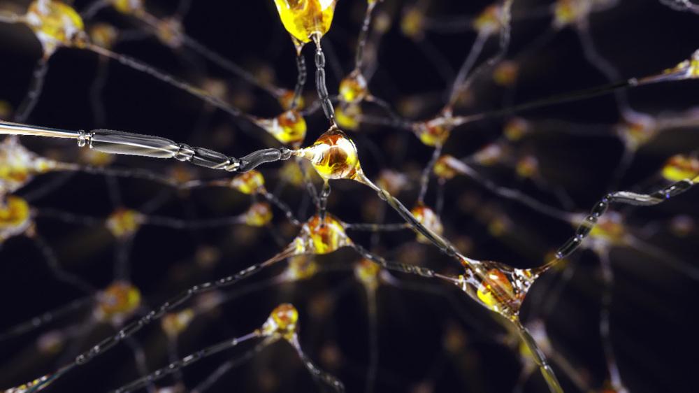 Neurons_b00_1000_1000.jpg