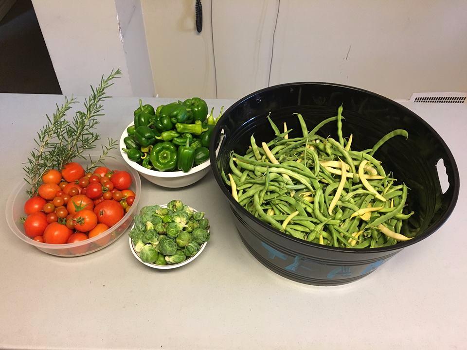 giving garden harvest 2017.png