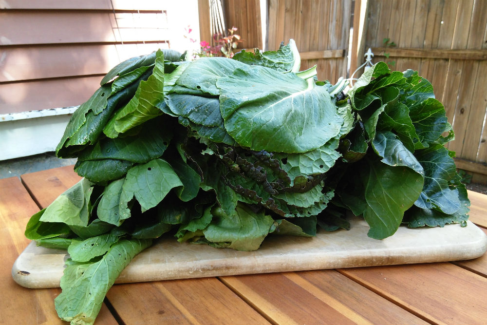 3 pounds of greens! Photos by Alice O'Dea