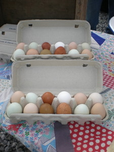 Eggs on a Quilt.jpg