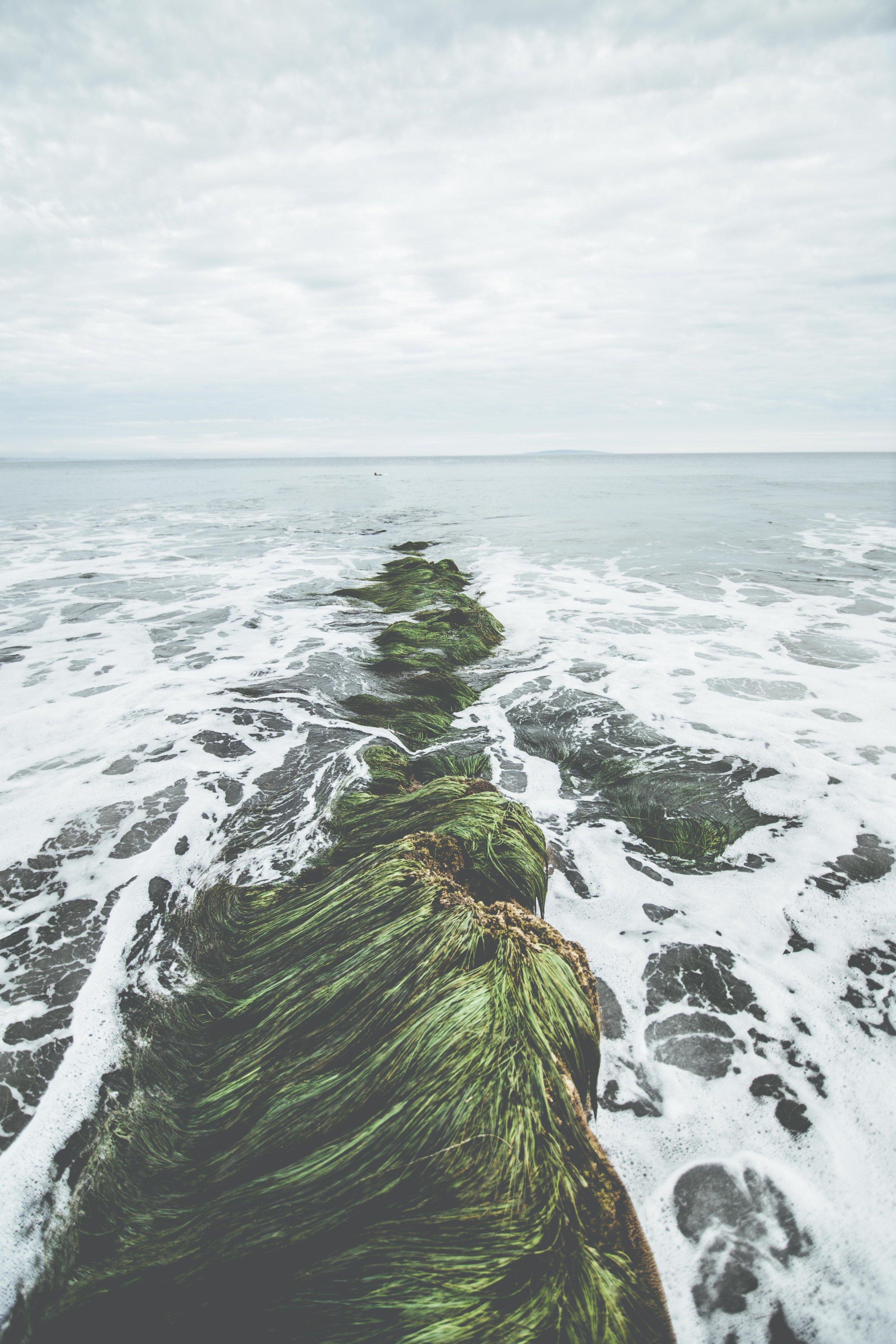 Paradise Cove (17 of 22).jpg