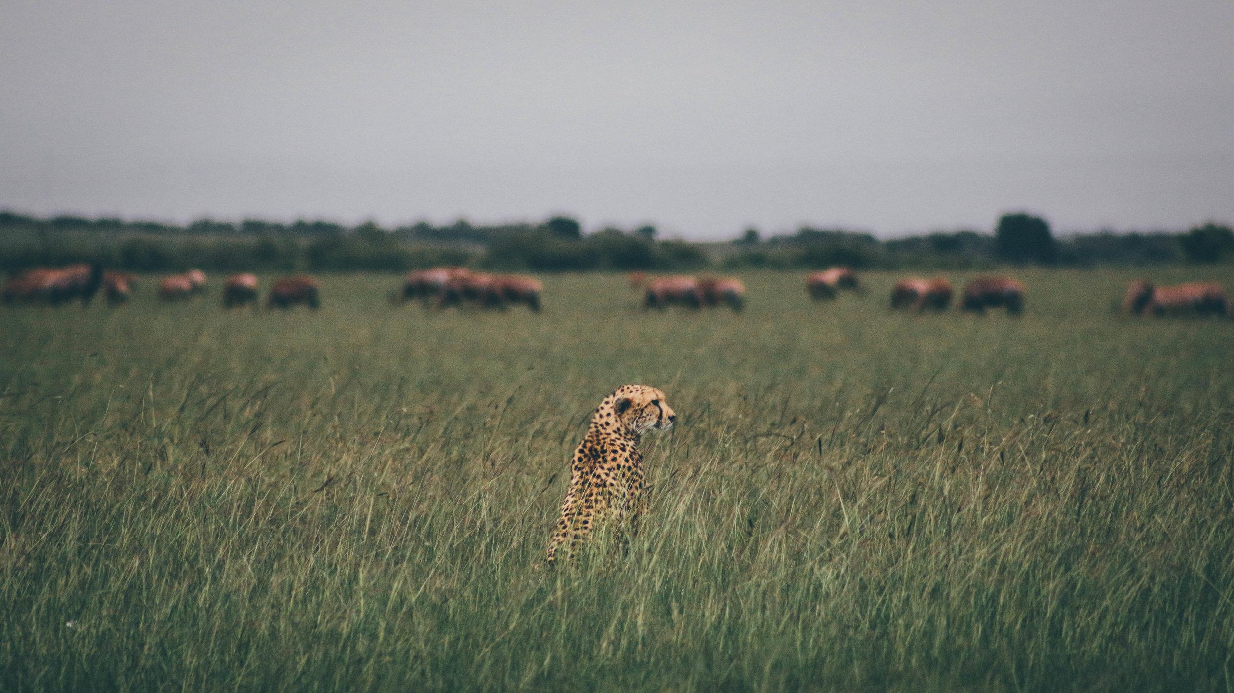 Kenya (223 of 323).jpg