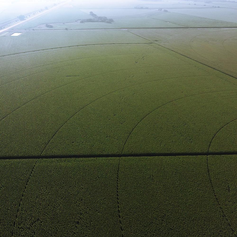 Pre-cut Field