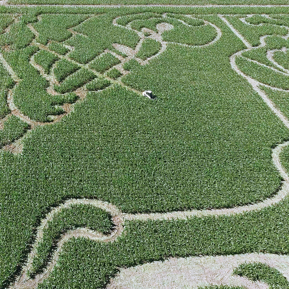 Creating the Maze