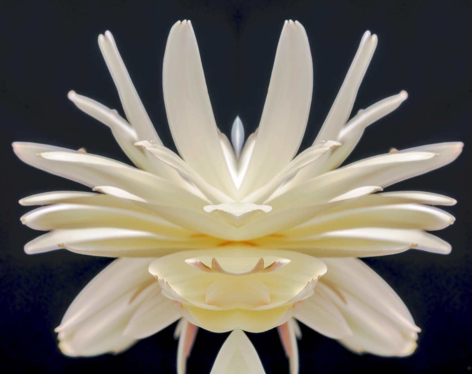 Arrival  subject: gerbera daisy love note: presence