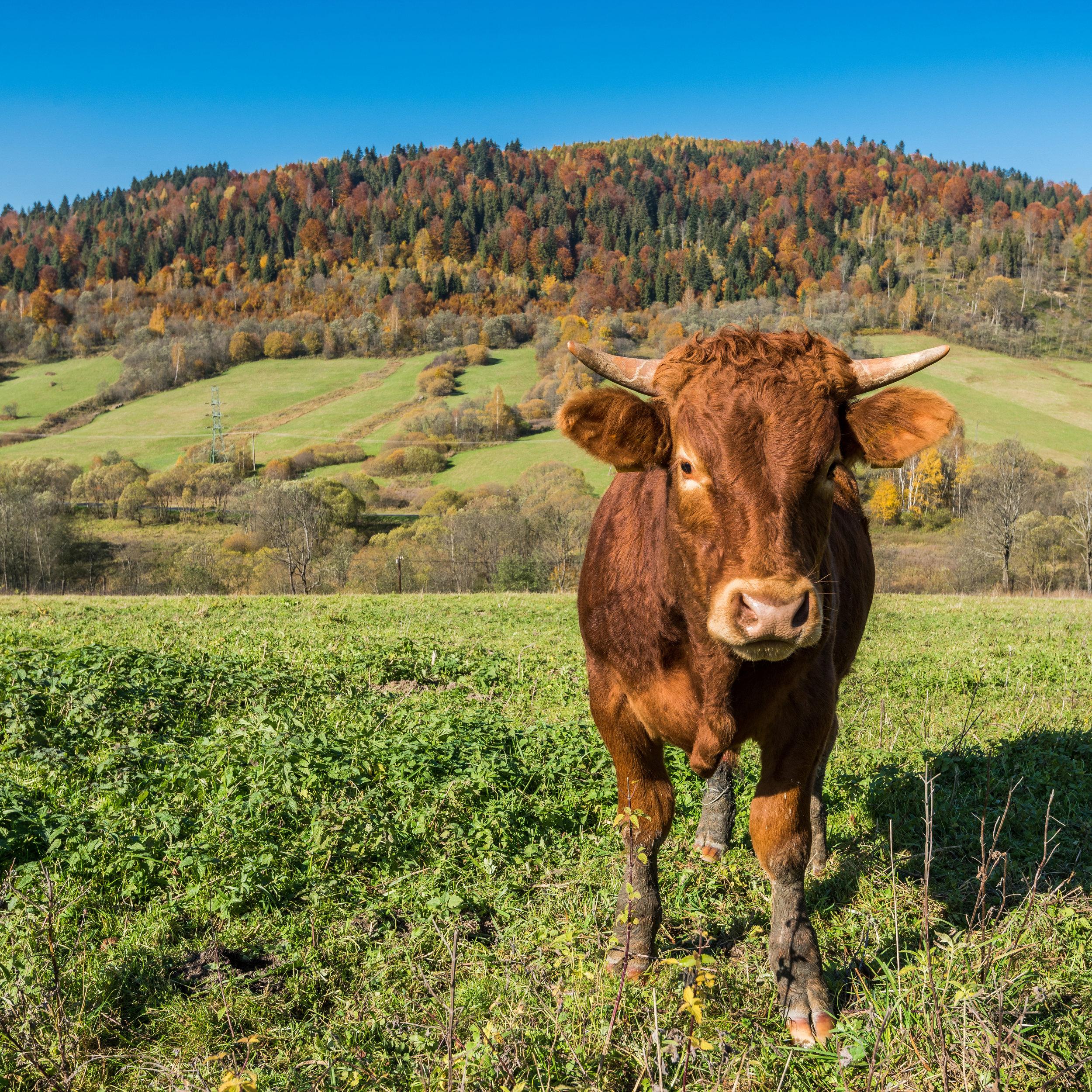 1-ranch.jpg