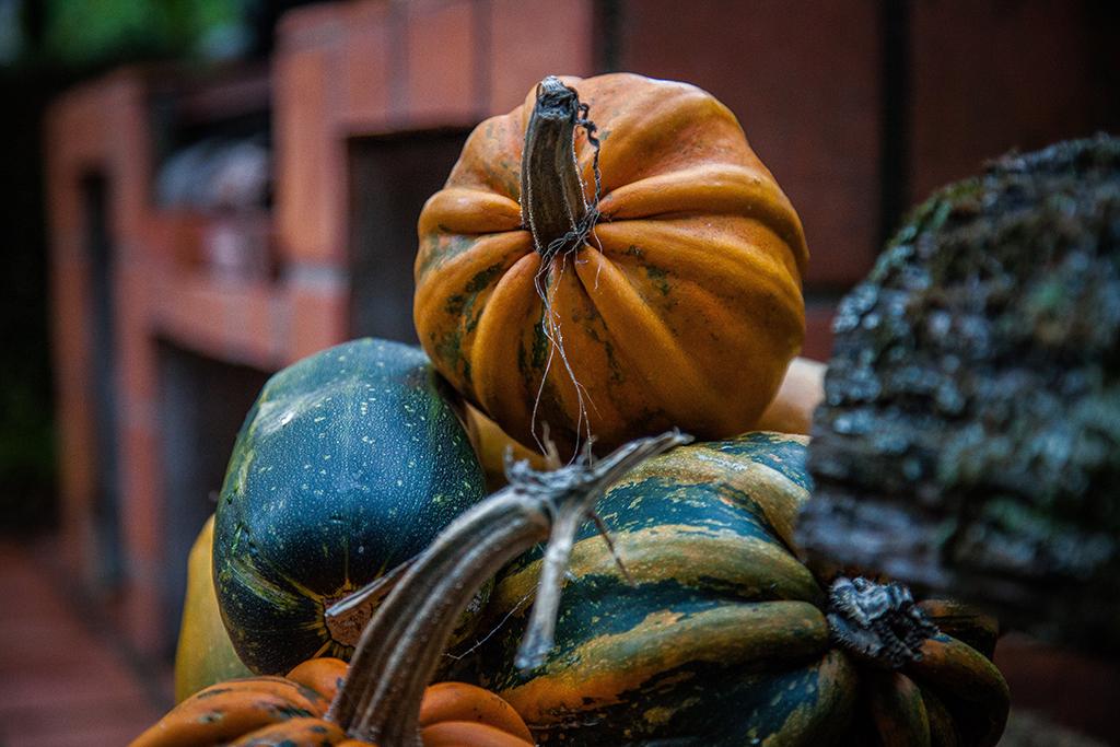 AutumnMotuekaRiverLodge_pumpkins.jpg
