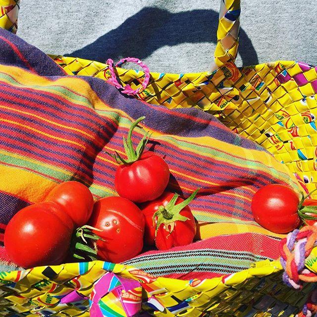 Summer harvest 🍅