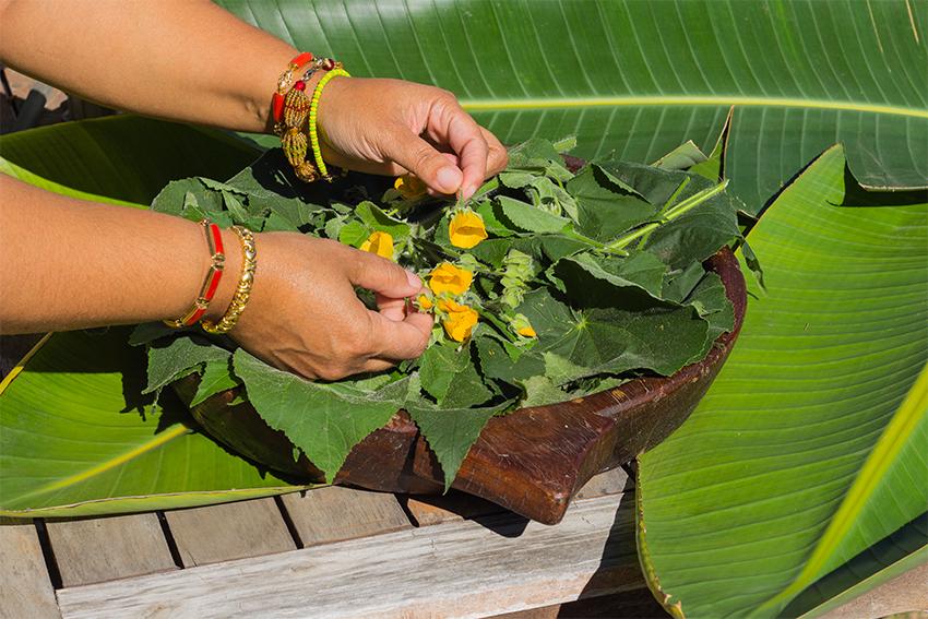 IMG_7613 hand plants.jpg