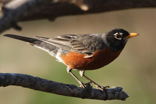 S-WI-bird1.jpg