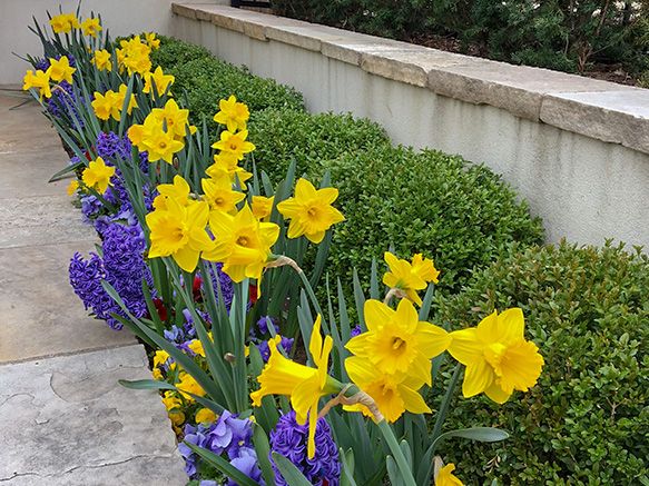 Clasen.Spring.Bulbs.jpg
