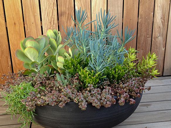 LN.Succulent.Bowl.jpg