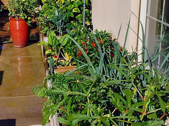 Gibbs.Veggie.Garden.jpg