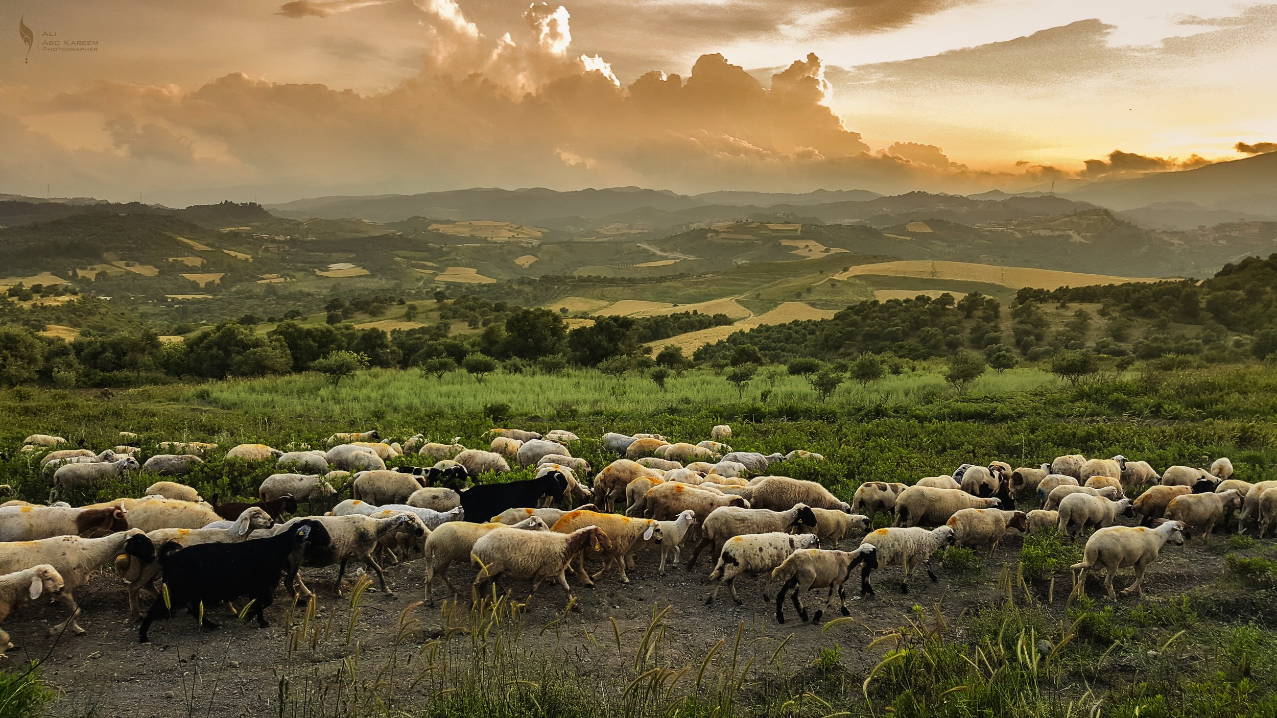 Peaceful Shepherd Christ