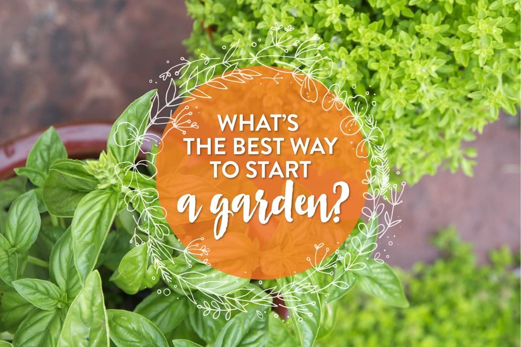 best way to start a garden copy.jpg