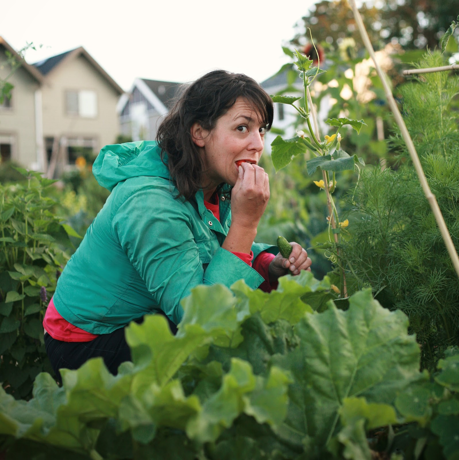 A Seattle Urban Farming Business Specializing in Prolific, Year-Long & Organic Edible Gardens for Homes and Businesses -