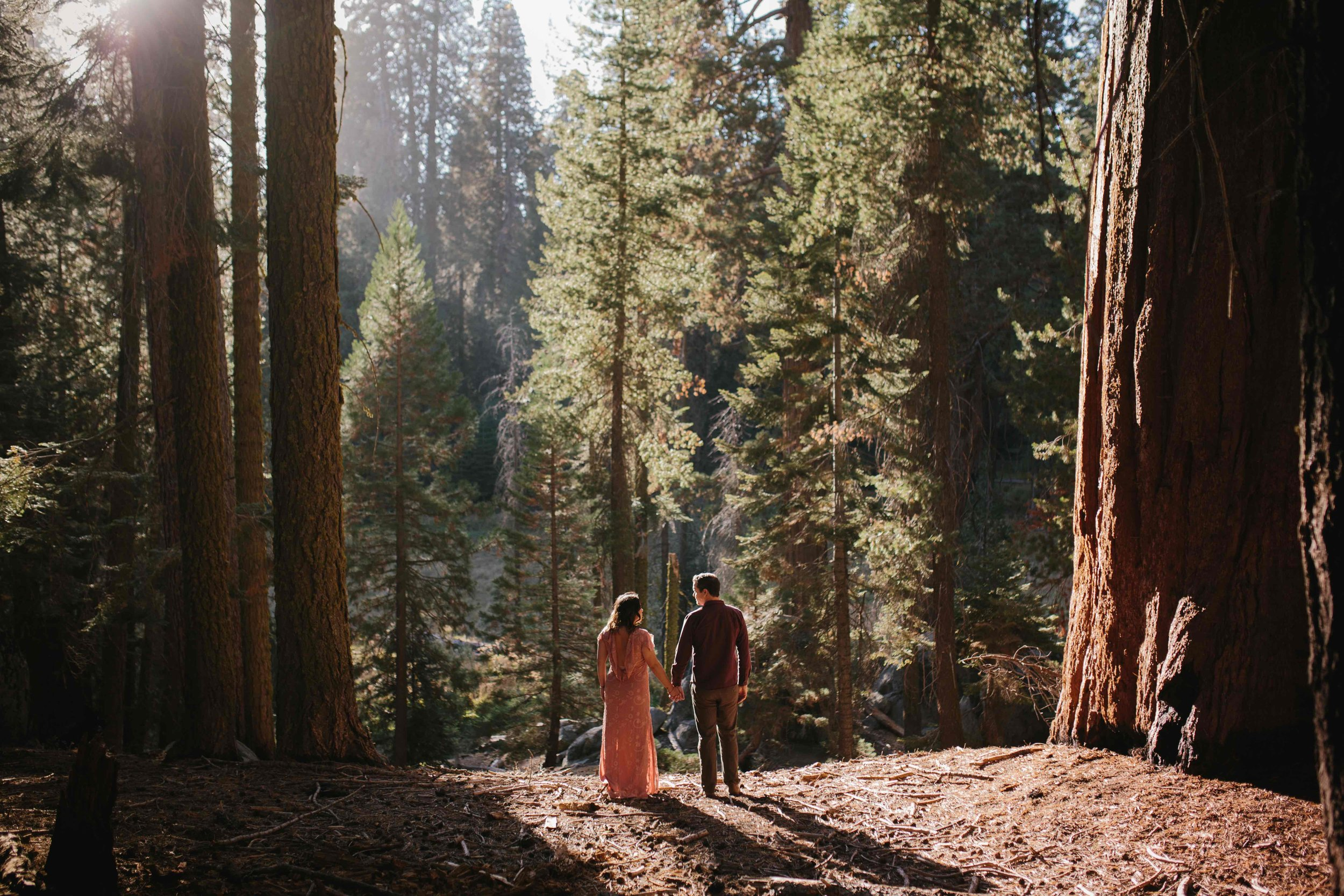 Sequoia National Park Anniversary © Abigail R Collins Photography