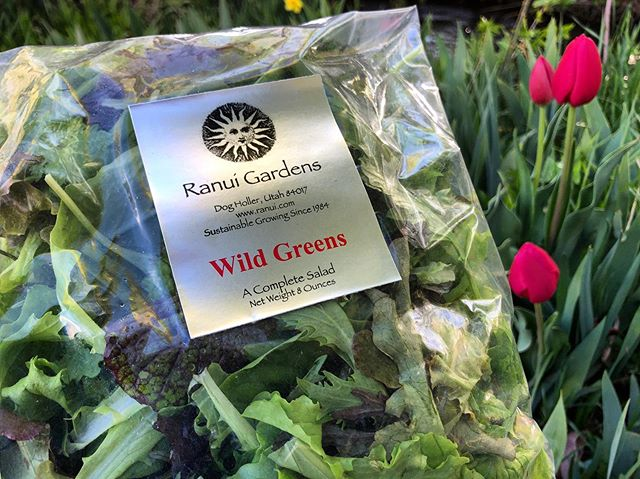 Wild Greens salad mix heading to @libertyheightsfresh! #getsome for the holiday weekend. 🥗🌮🥙🥩🍔