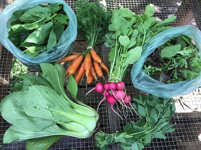 Yesterday's first #CSA share for the season. If you're not in our CSA, come shop with us at the @parkcityfarmersmarket today from noon-5:00.