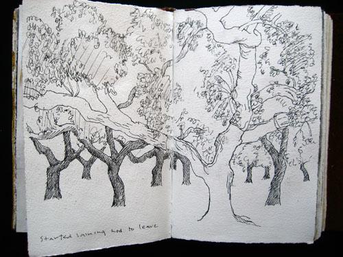 journal trees