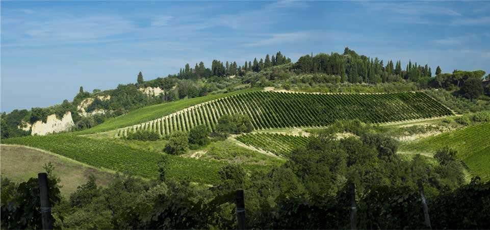 View of the surrounding landscape - vineyards, cypress trees, rolling Tuscan hills.