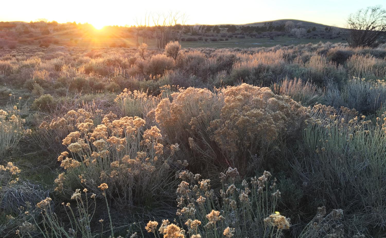 Setting sun over sagebrush - Saratoga, Wyoming. Brush Creek Foundation for the Arts.