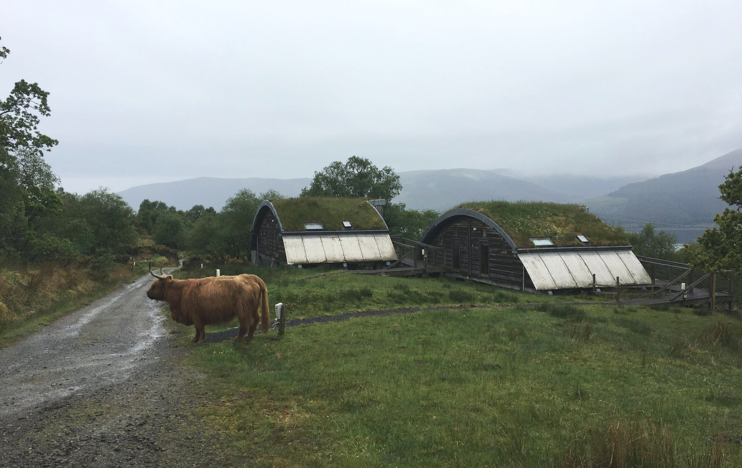 The sod-roofed Pods with shaggy Highland Cow.