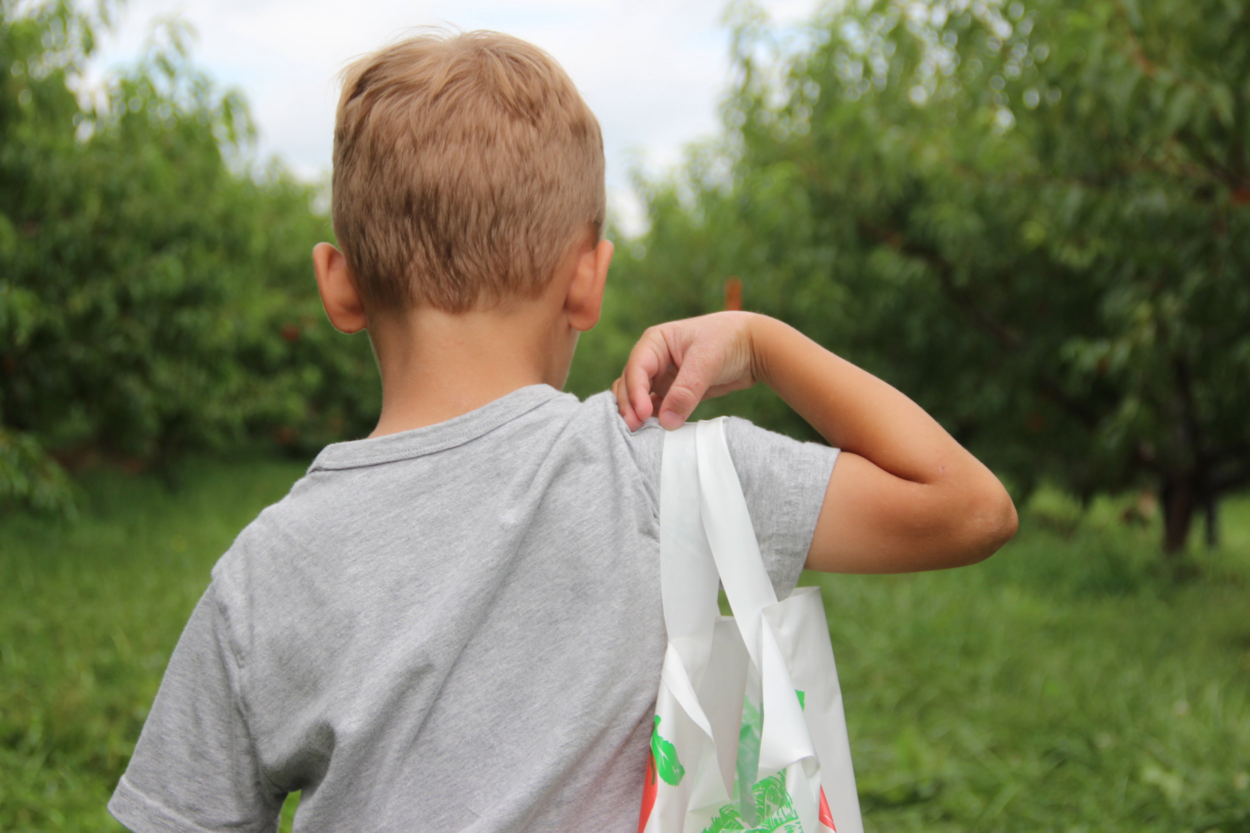 Boy carrying peaches at Bishop's Orchards