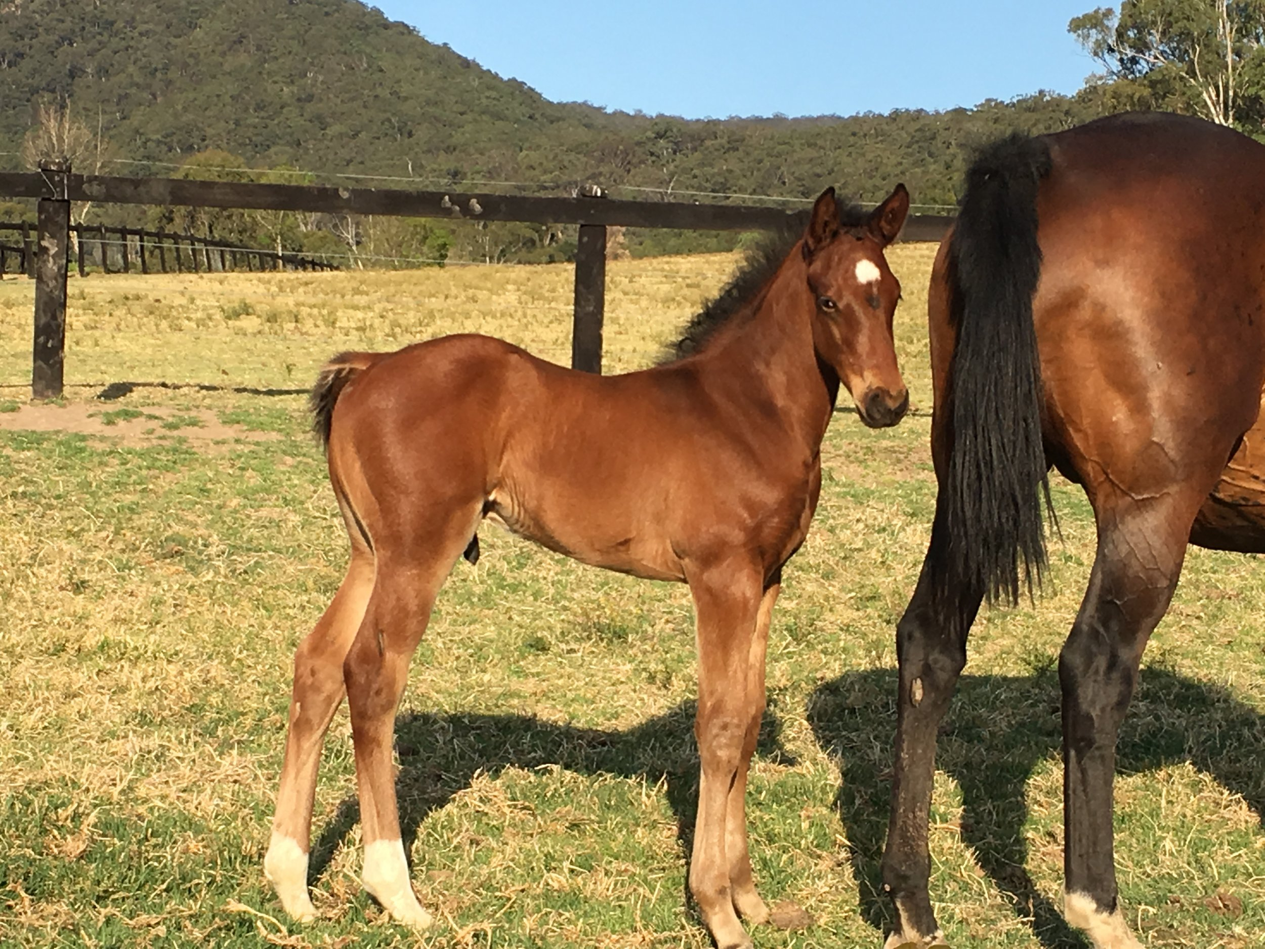 Keeping Score with foal at foot by Deep Field.