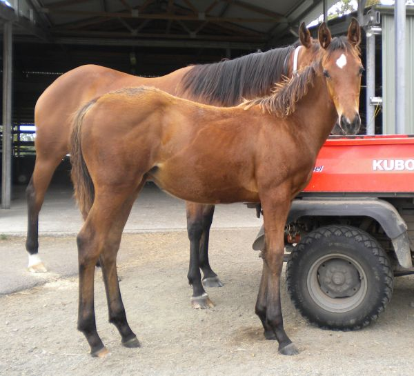 Obstinate Lass as a foal