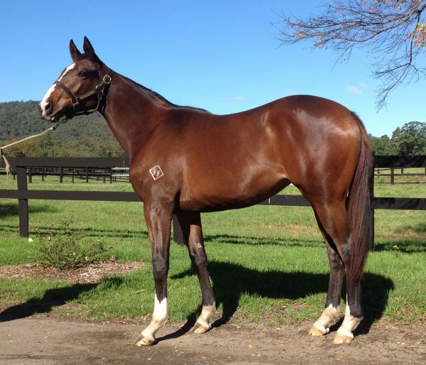 One More Tequila as a yearling