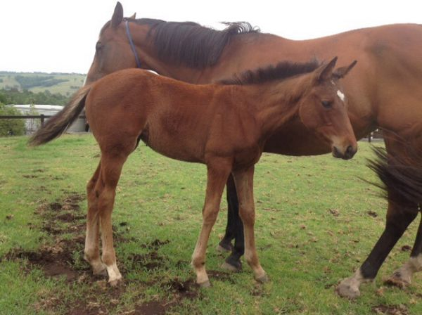 Pacific Queen as a foal