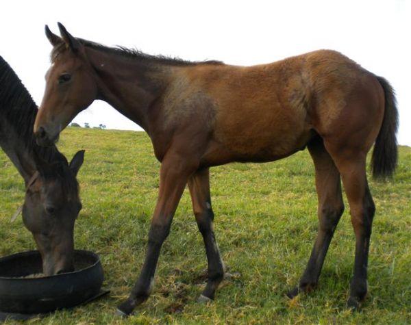 Valar Morghilus foal.jpg