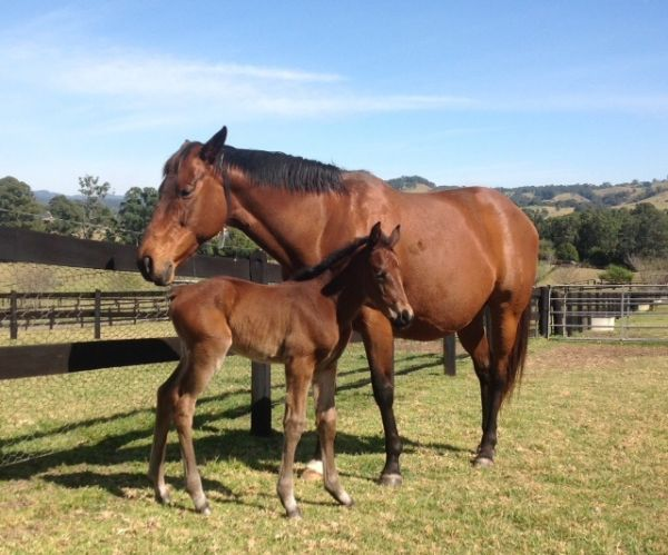 Cudabeen as a foal at foot