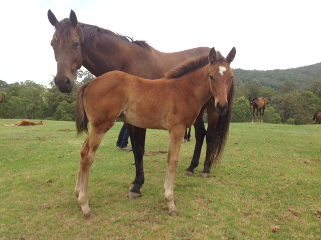 Hinchinstyle as a foal at foot