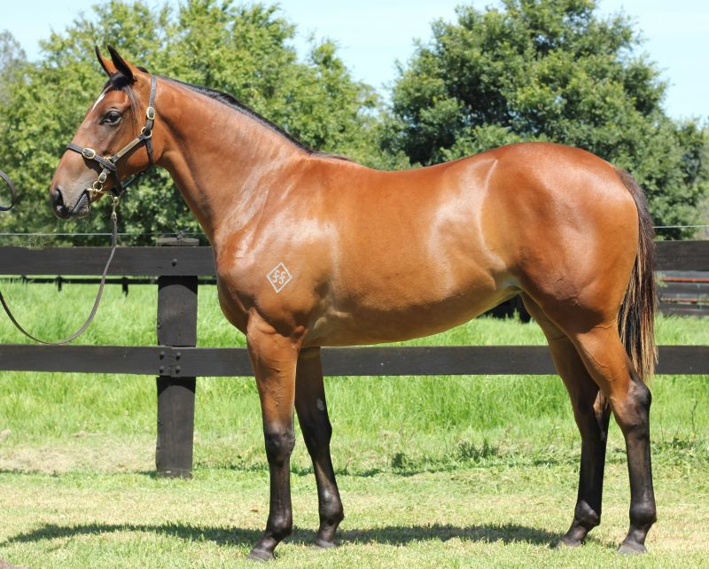 Hinchinstyle as a yearling.