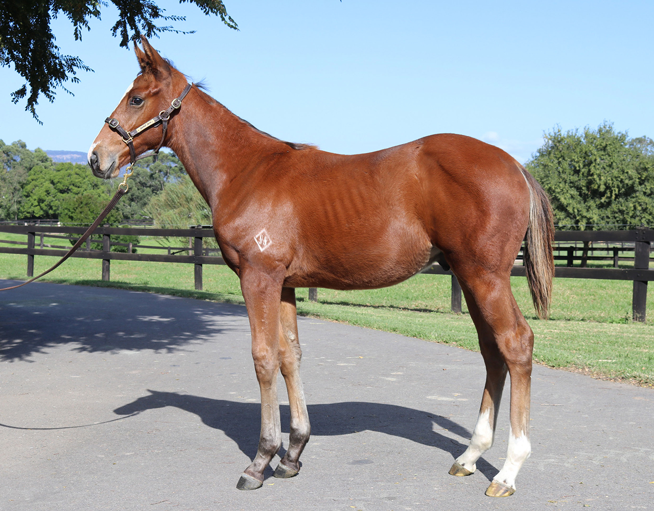_0003_Vancouver x Blowin In The Wind Colt Lot 171.jpg