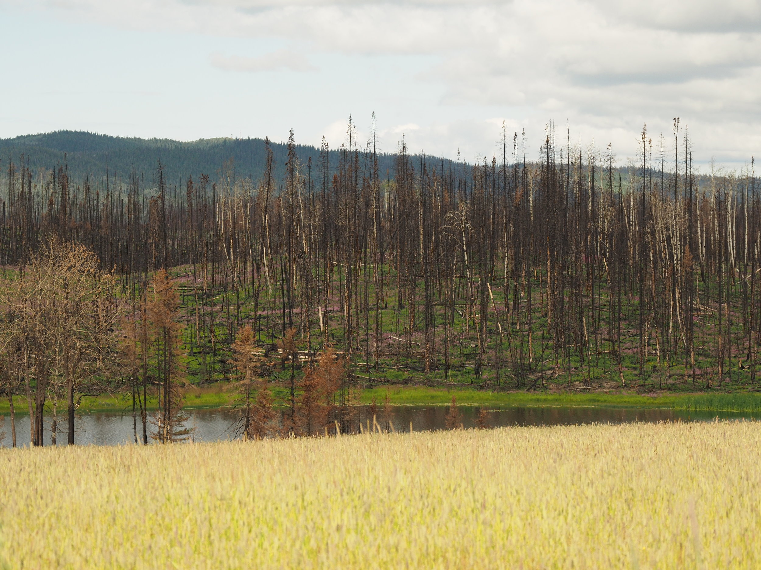 Post-burn landscape