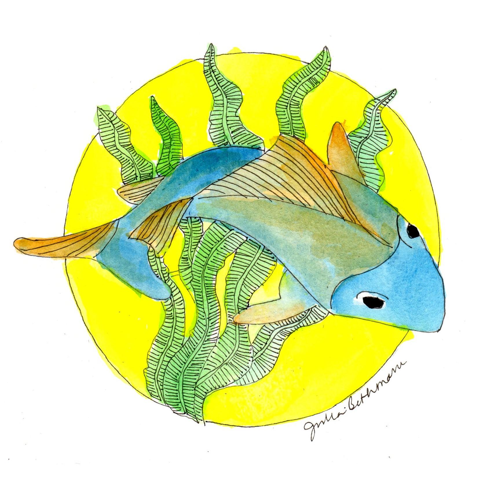 single fish.jpg