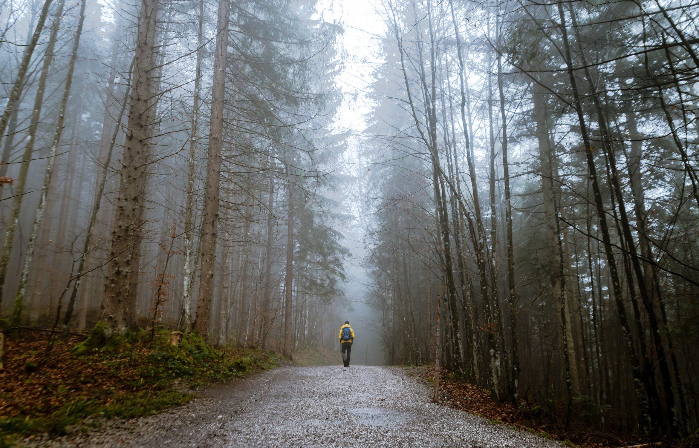 Forest 4.jpeg