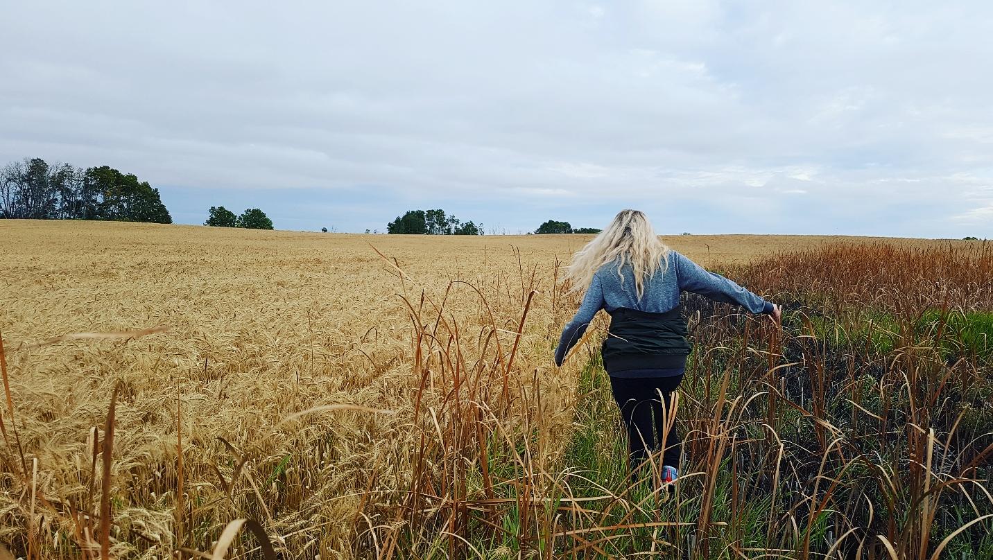 Edited Wheat Crop.jpg