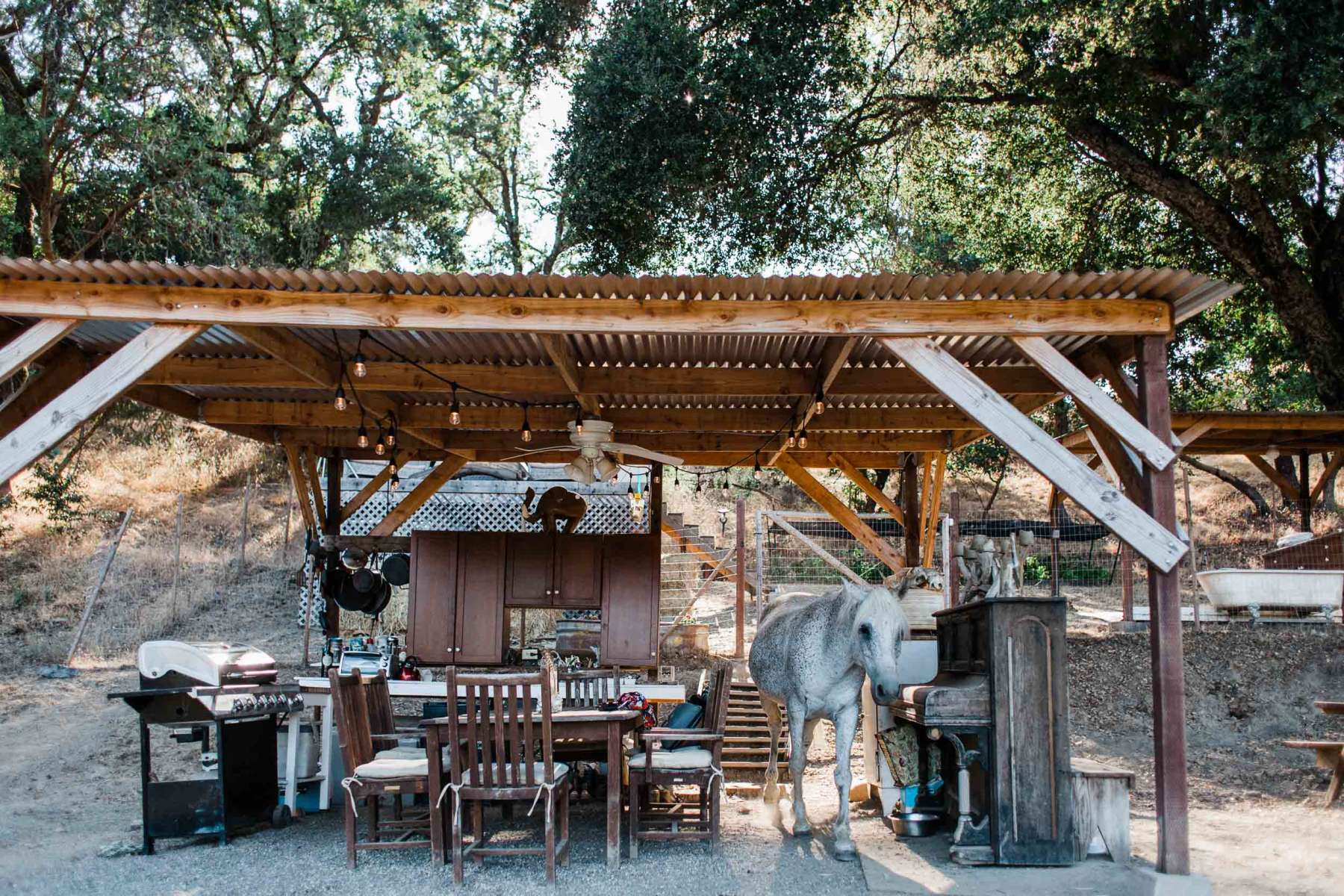 Sindisa Sanctuary Resident Horse Enjoys the Luxe Glamping Dining Experience