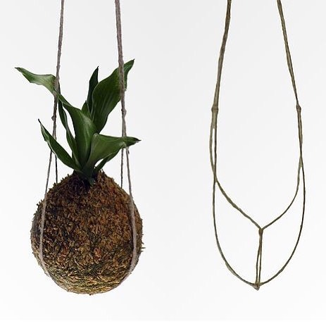 Kokedama inspo for @wilding.studio workshop this Saturday! 🌟🌟 . .  Only a few tickets left! Grab them for only $75, link is in our bio x . .  #bunbury #workshop #japanese #kokedama #creative #plants #hangingplants #nature
