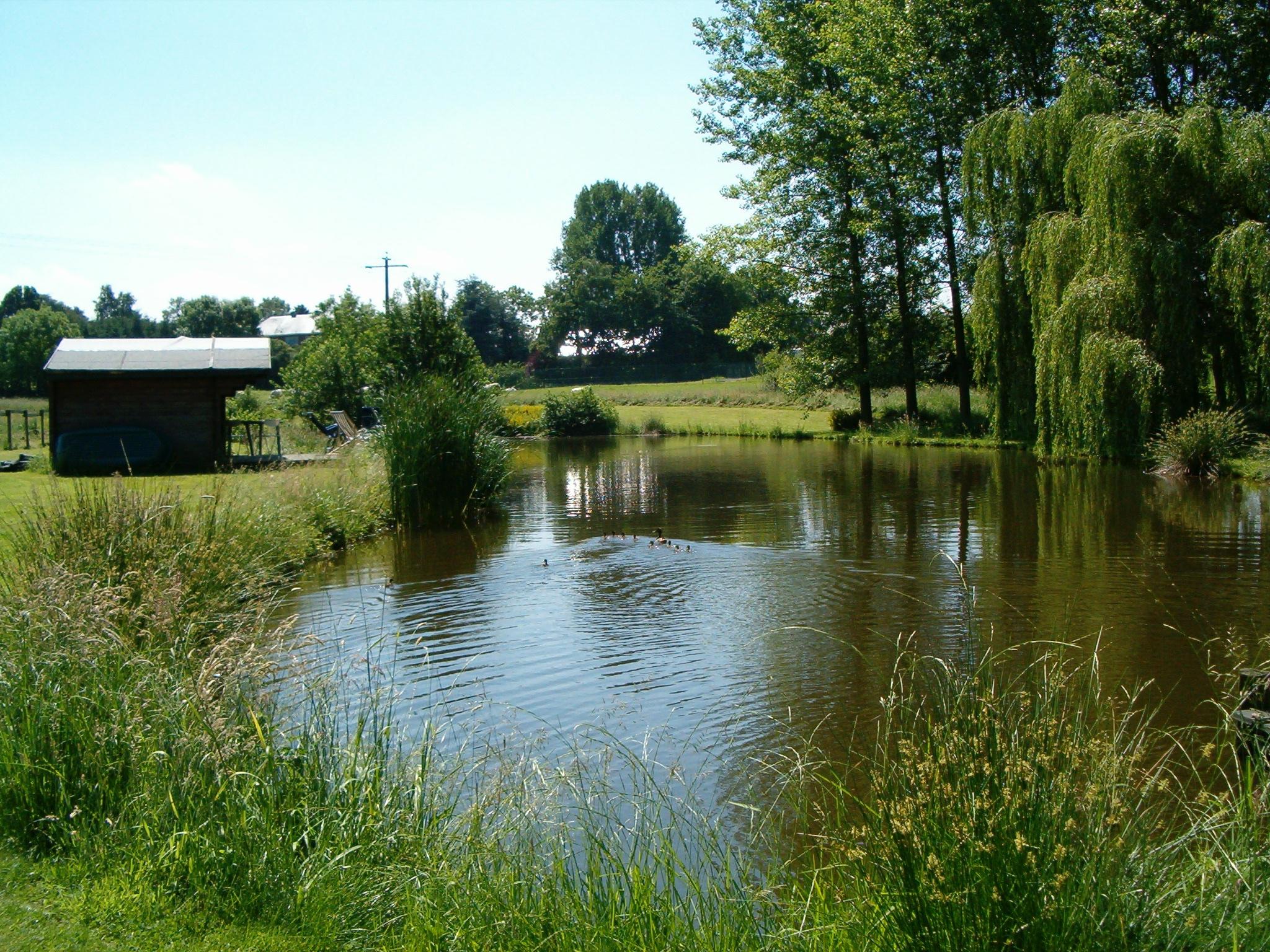 Étang privé - Un havre de paix, parfait pour pêcher et se relaxer