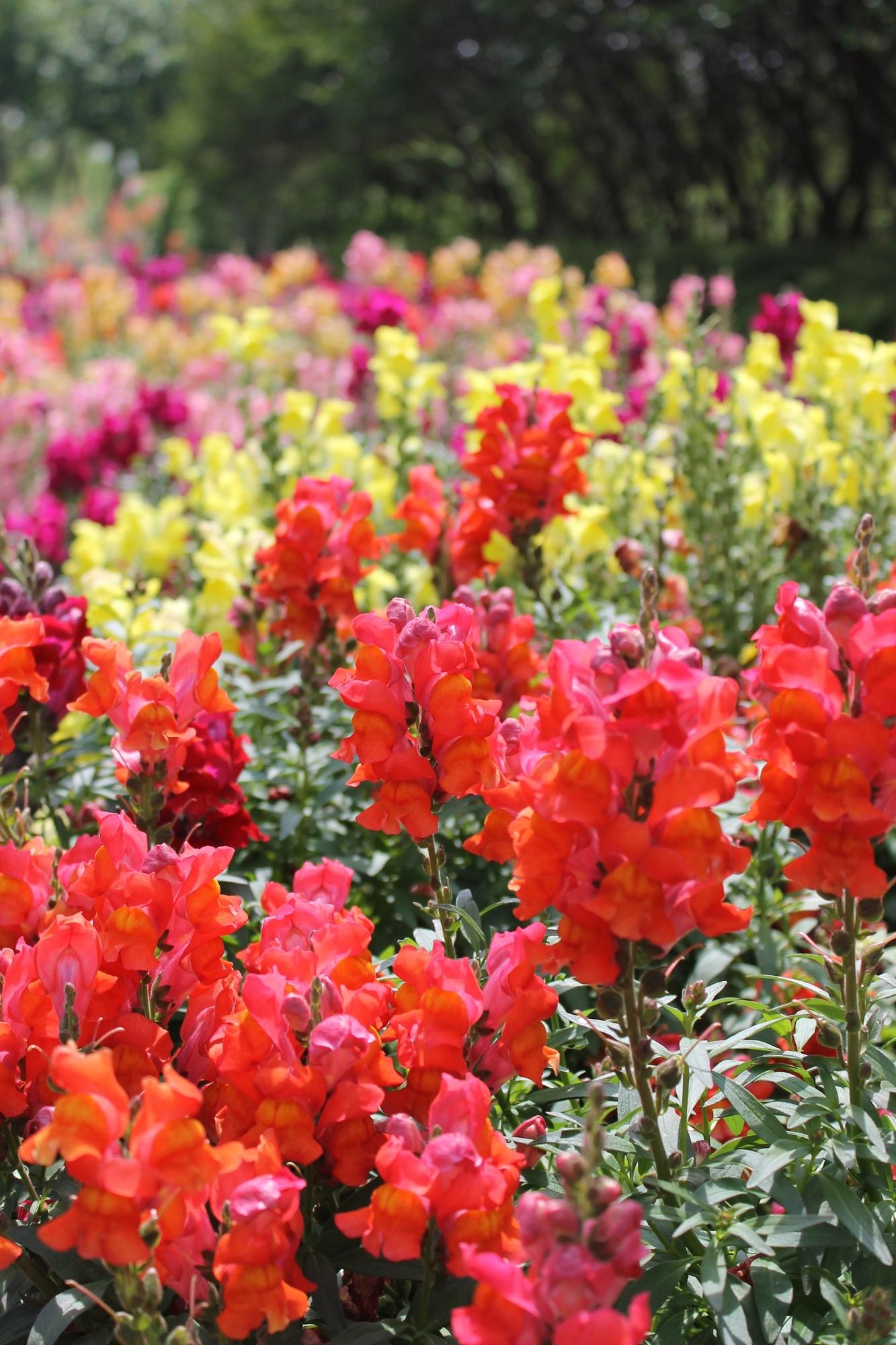 a-sea-of-flowers.jpg