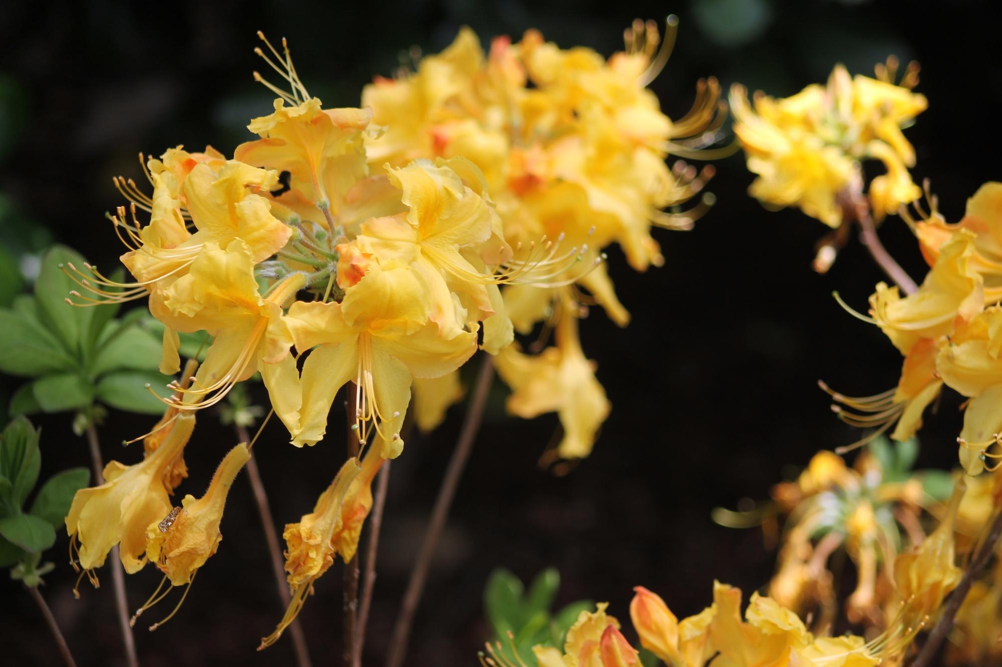 yellow-flowers-in-wind.jpg