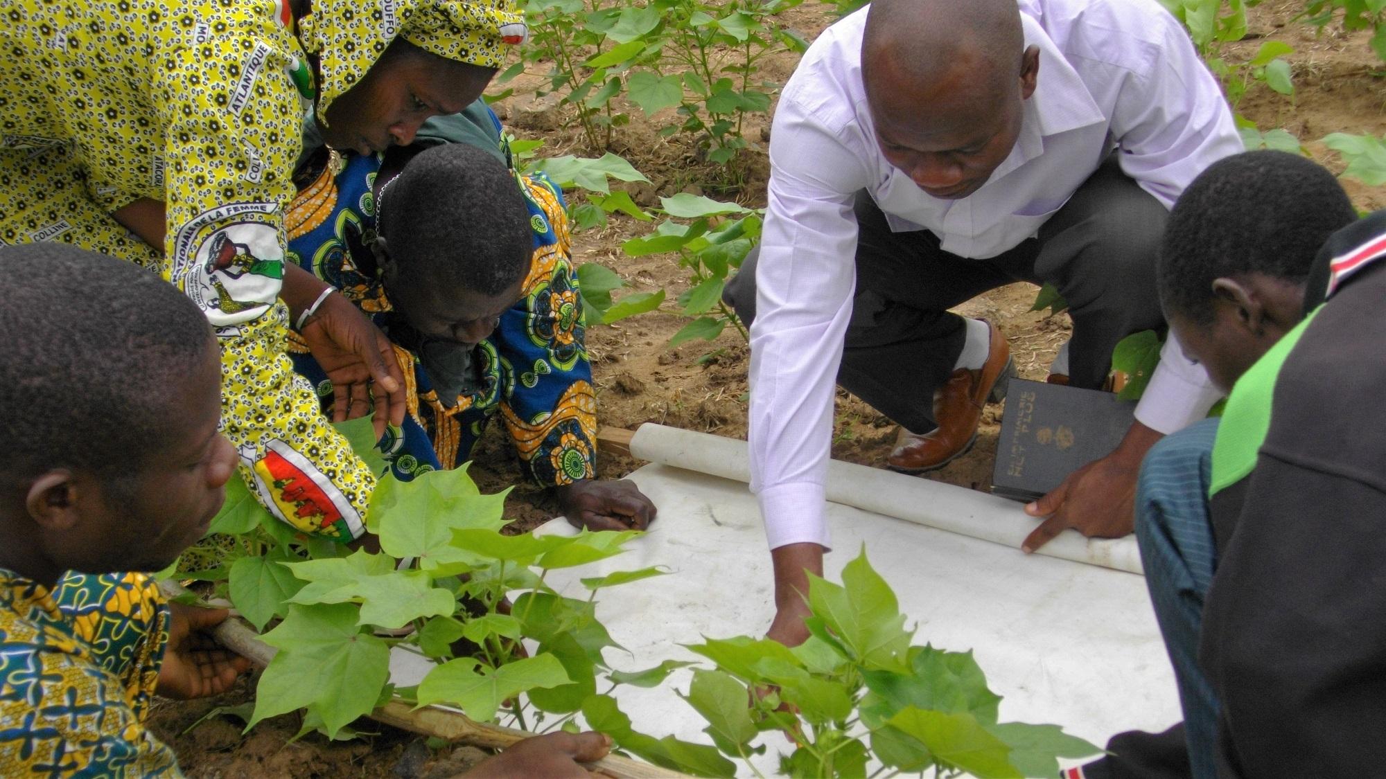 Benin-farmer-field-school.jpg