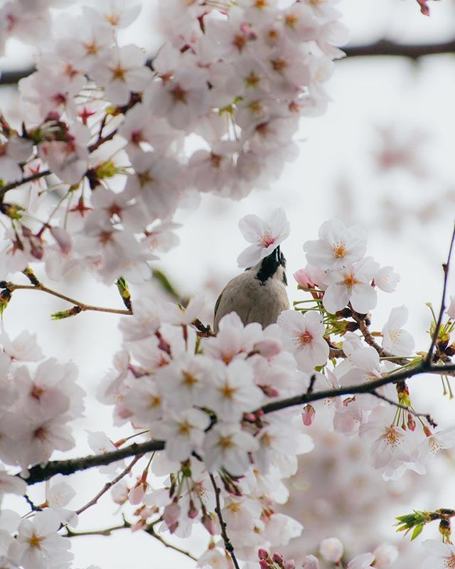 The bird is me and the flower is the love I have for all of you 🌸💕