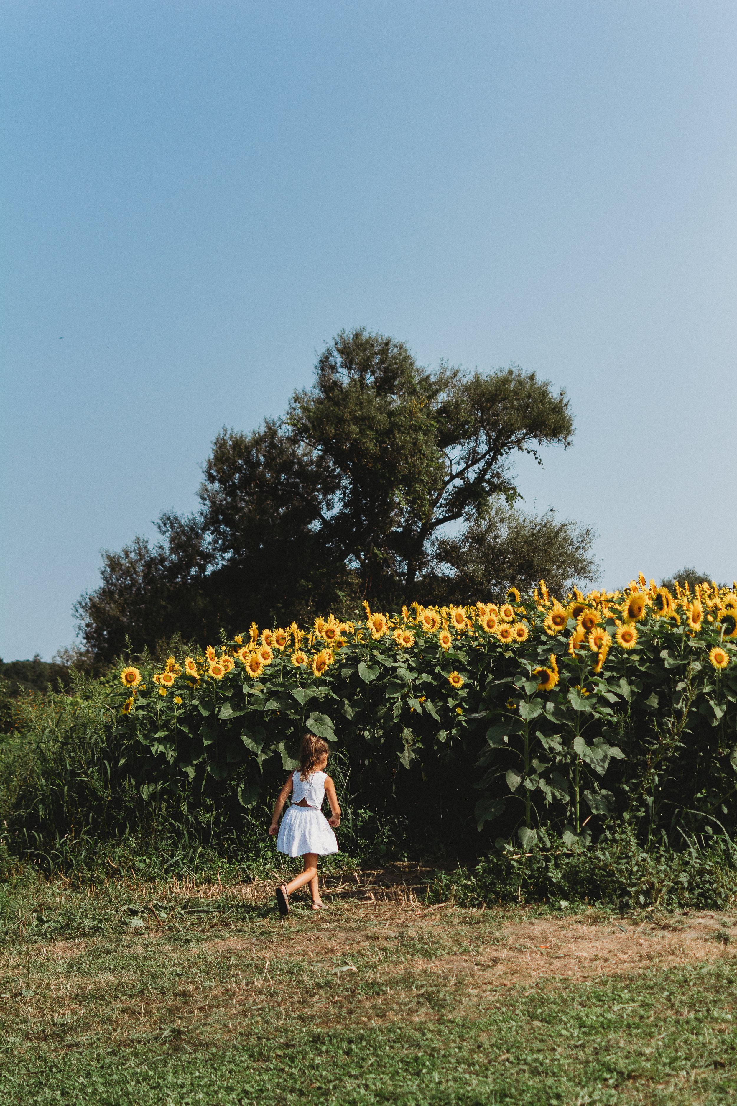 Colby Farm Sunflowers (8 of 58).jpg