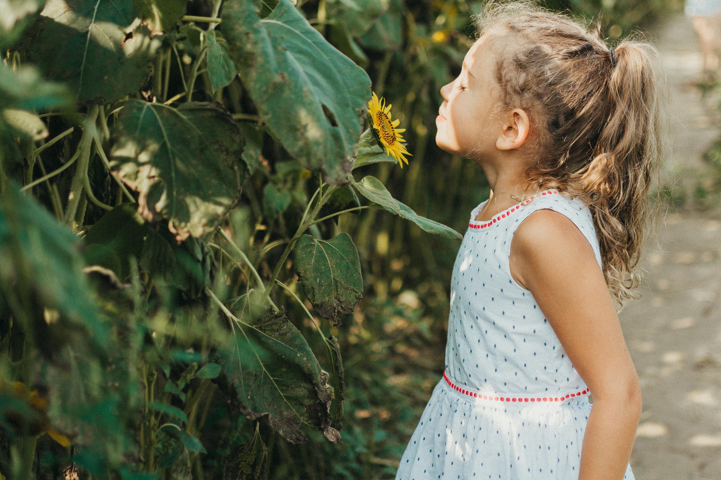 Colby Farm Sunflowers (27 of 58).jpg